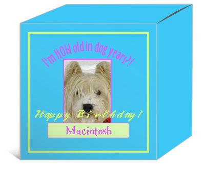 Dog Birthday Boxes